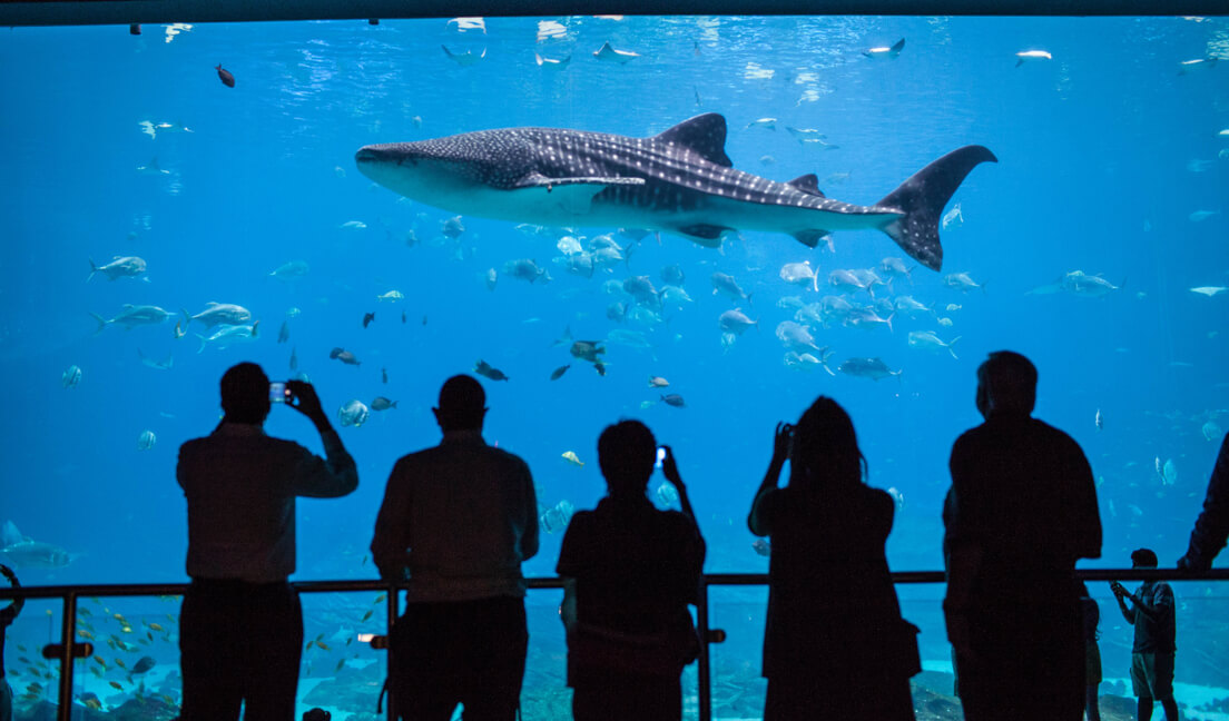 Georgia Aquarium Exceeds Sustainability Goals